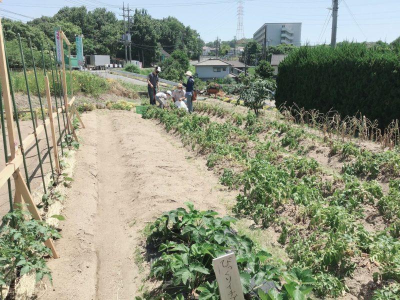 福山市注文住宅農園